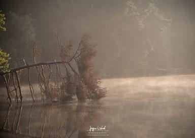 Bärensee